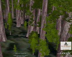 Explore Redwood Trees in 3D