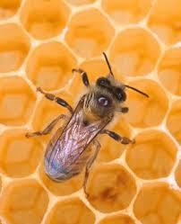 موم بافی زنور عسل