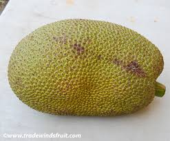 http://www.tradewindsfruit.com/jackfruit.htm