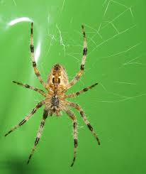 http://matthew.gray.org/2006/09/spider_17.html