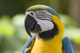 http://tennisplanet.wordpress.com/category/parrot-in-japan-beats-humans-in-solving-chain-puzzle/