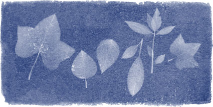 Anna Atkins' 216th Birthday
