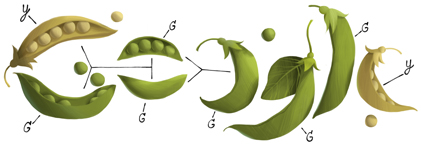 The word Google spelled out using pea pods